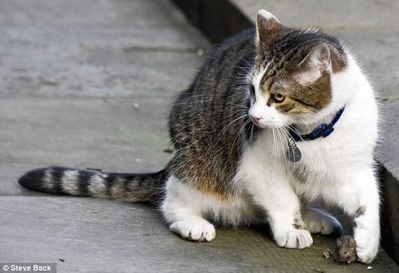 壁纸 动物 狗 狗狗 猫 猫咪 小猫 桌面 570_390