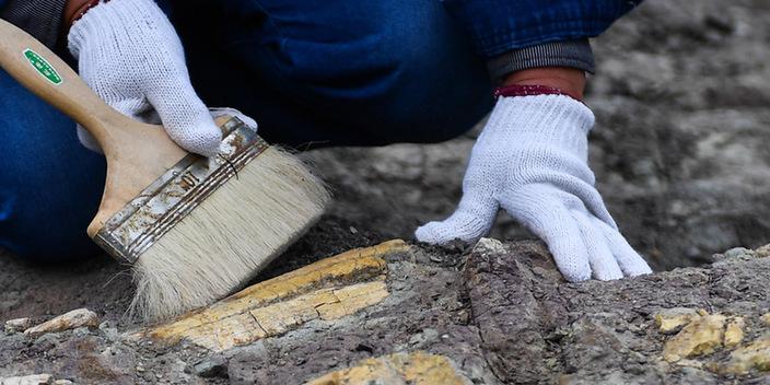 吉林延吉龙山恐龙化石群进行系统发掘
