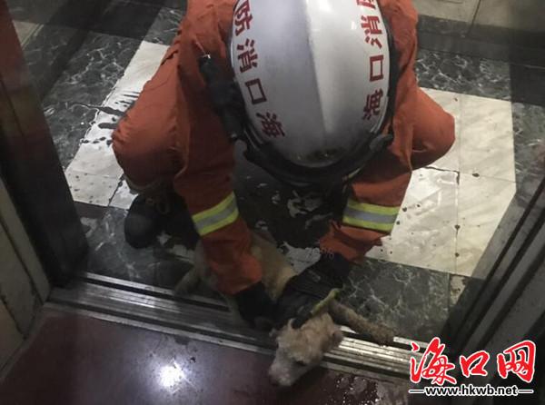 新锦福5888下载狗被困电梯受惊咬伤小主人 海口消防官兵及时救援