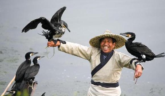 (社会)(3)安徽灵璧:鸬鹚捕鱼引客来