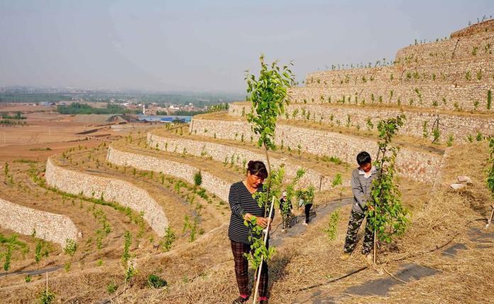 (经济)(2)荒山改梯 蔬果飘香