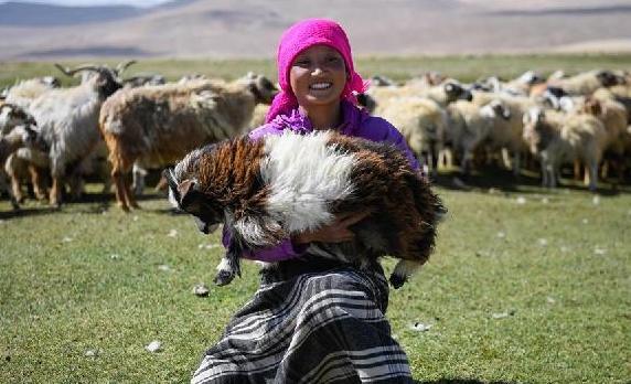 (经济)(4)西藏日喀则牧民剪羊毛