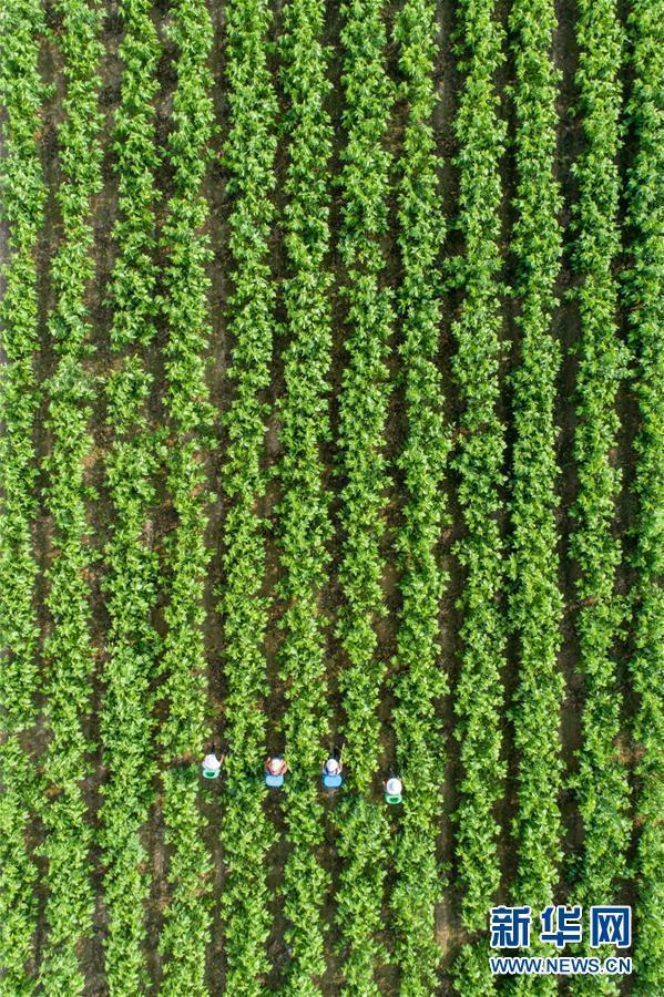 #(经济)(4)农忙在小暑