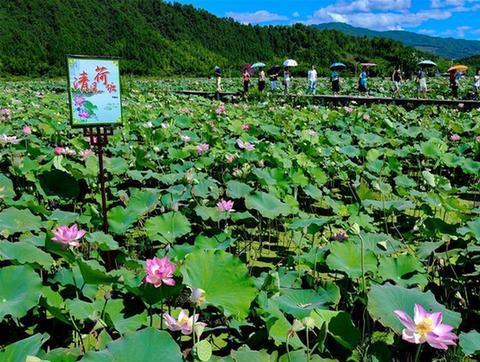 (社会)(1)武夷山:清风荷塘引客来