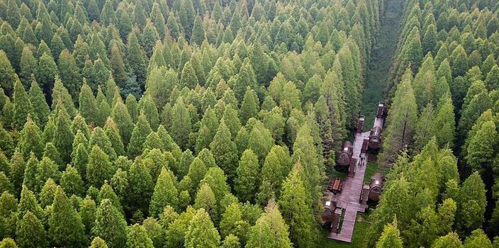 (环境)(1)江苏东台:森林氧吧醉游人