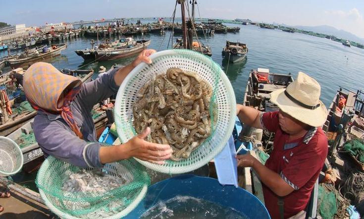 #(经济)(3)黄渤海伏季休渔期结束