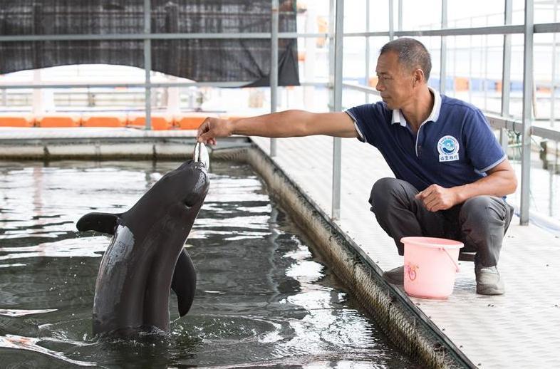 (图文互动)(3)从消失的白鱀豚到人工繁殖江豚——三个故事见证长江生态保护变迁