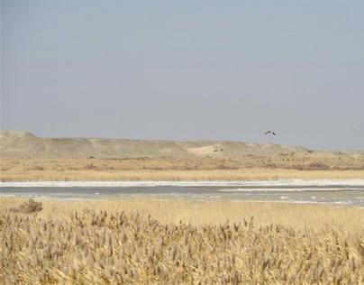 (XHDW)(4)探访敦煌西湖国家级自然保护区