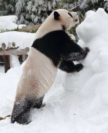 """(国际)(5)韩国""""熊猫世界""""开业1000天"""