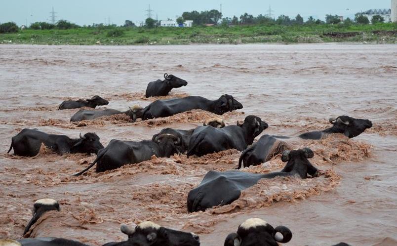 (国际)(3)洪水泛滥达维河