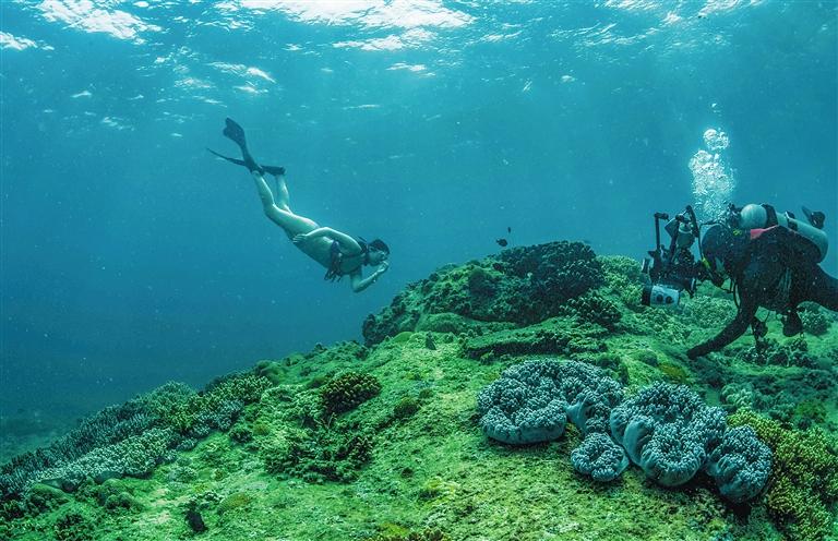感受海底世界的神奇魅力   海洋约占地球表面积的71%,在波涛汹涌