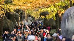 (美丽中国)(1)金陵古道染秋色