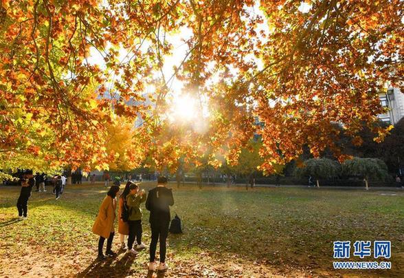 (美丽中国)(1)北京:校园秋色如画