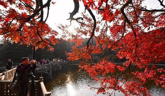 (环境)(1)江西庐山:枫叶美景迎客来