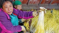 (社会)(1)河北遵化:蒜黄飘香乡村致富路
