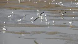 (环境)(2)鸟舞巢湖