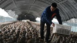 (經濟)(2)河北魏縣:發展産業防止返貧