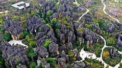 (環境)(1)云南:黑石箐石林生態美