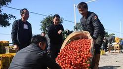 """(经济)(3)广西""""南菜园""""秋冬菜进入收获季"""