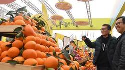(经济)(1)重庆奉节国际橙博会开幕