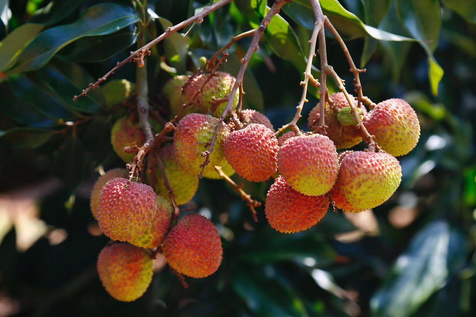 酸酸甜甜,夏季水果也養生