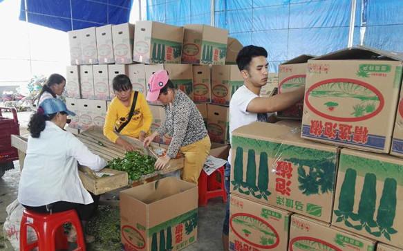 海口秀英区冬季瓜菜喜获丰收 政府多举措助农销售