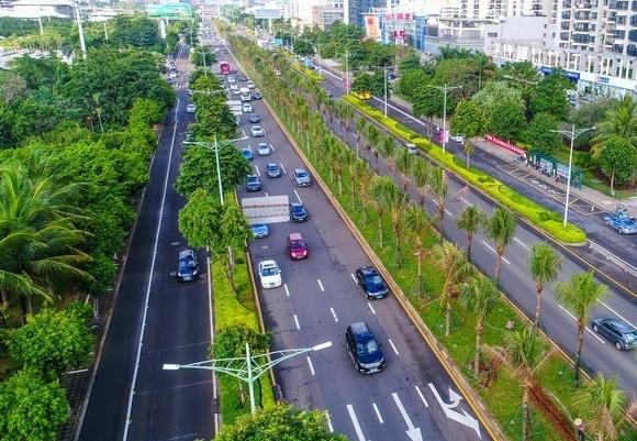 高清|海口五条道路进行绿化改造 补植万株椰子树