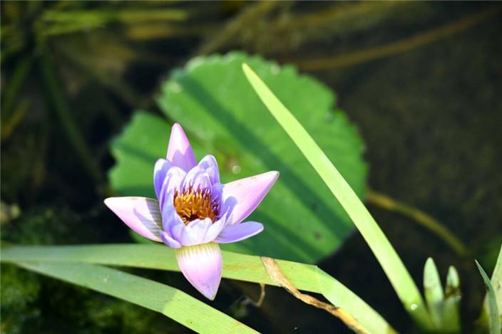 春涨一篙添水面 绿满微风岸——回看美舍河湿地生态修复(4)