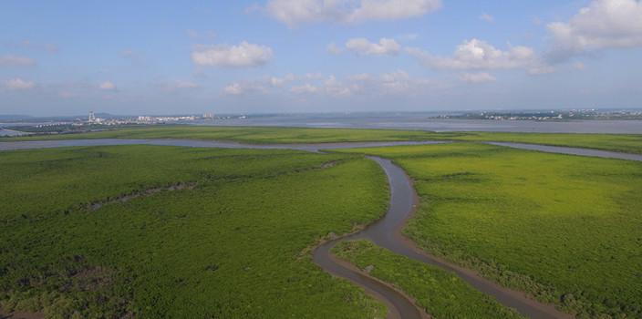 海口:湿地,妇孺应知的人与自然生命共同体