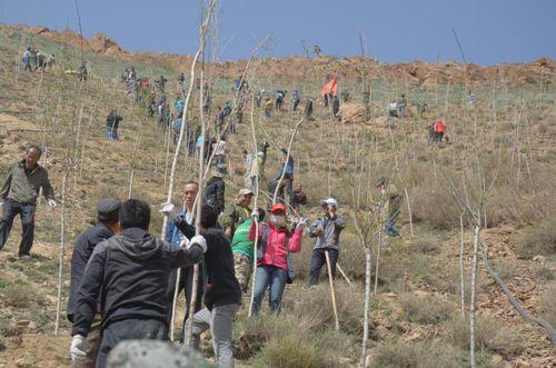 山坡上志愿者们植树的身影