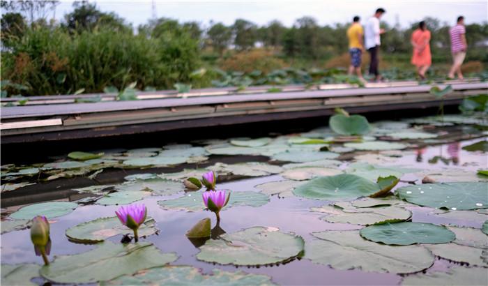 海口:湿地入城景更优 生态修复城更美