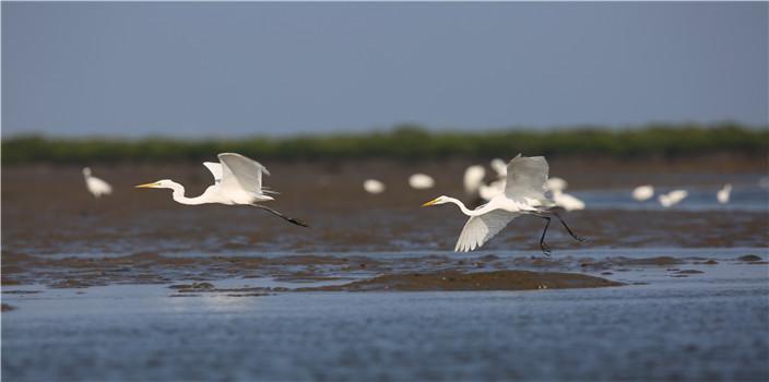 """湿地""""哨兵""""护航最美海岸东寨港"""