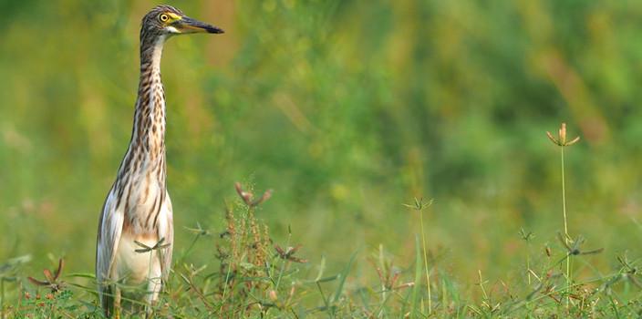 海口五源河湿地公园发现过境鸟和越冬鸟