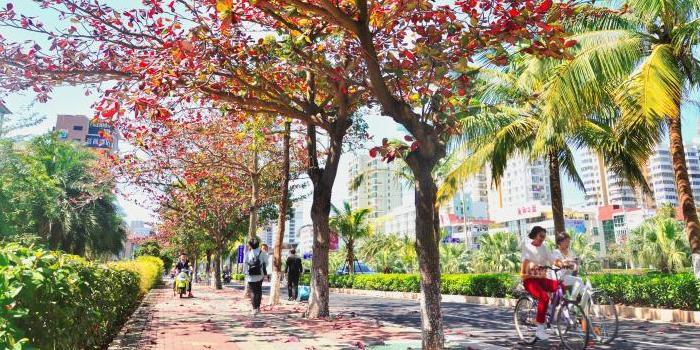 海口:园林城市美如画 四时花香四季春