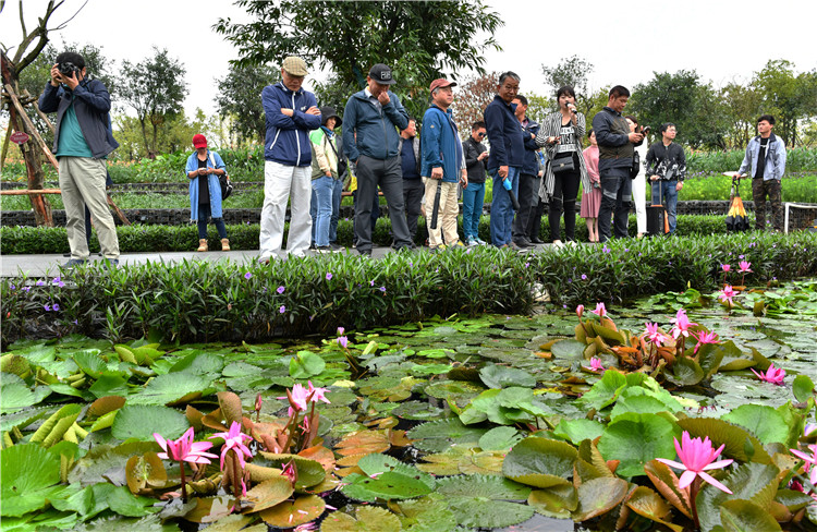 韩国济州市考察团海口美舍河凤翔湿地公园参观学习