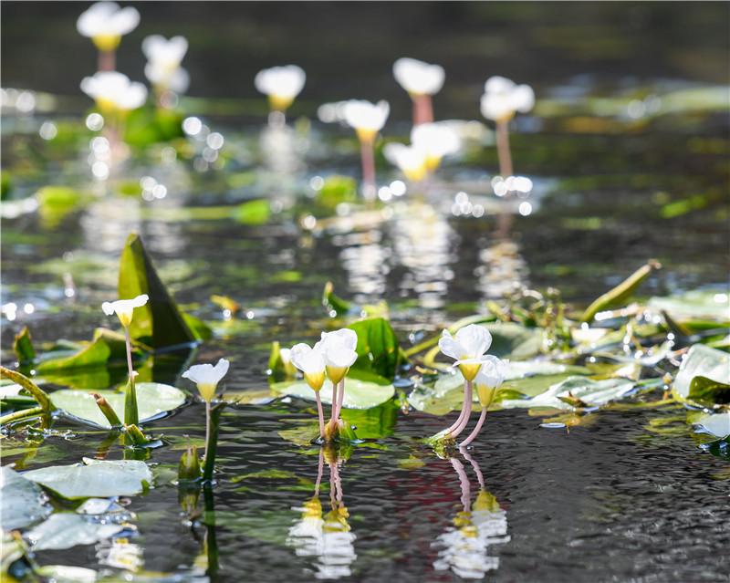 国际湿地城 澳门葡京官方娱乐平台靓招牌