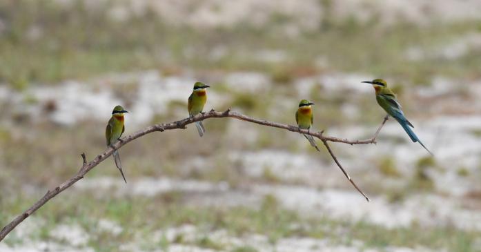 """邂逅""""最美小鸟"""" 海口五源河湿地公园搭建观鸟小屋"""