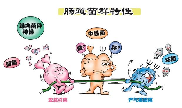 """人体肠道细菌会""""吃掉""""药物"""