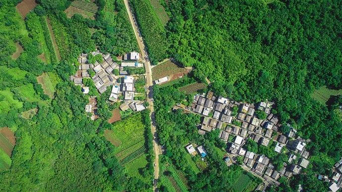 """海口:鹧鸪茶树添新绿 森林""""搬""""进村庄里"""