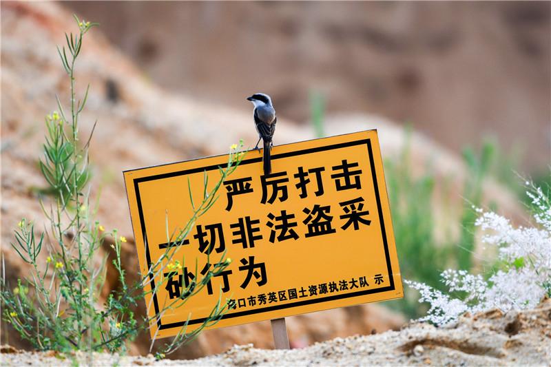 """椰城表情:鳥兒的""""溫馨提示"""""""