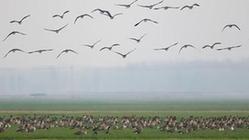 (环境)(2)黄河湿地群雁来临