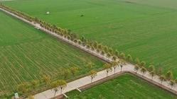 (环境)(2)俯瞰绿色麦田