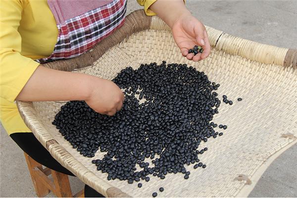 石山黑豆:古色谷香 无限能量